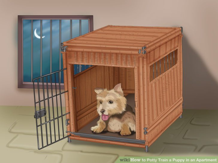 Photo of Top 8 Easy Tips To Potty Train Your Puppy