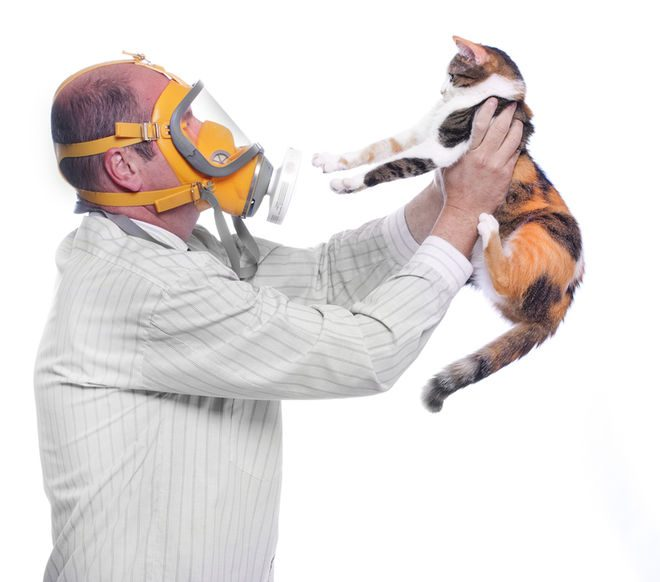 Photo of If You Read Nothing Else Today, Read This Report on Allergy to Cat