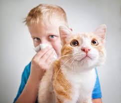 allergy to cat