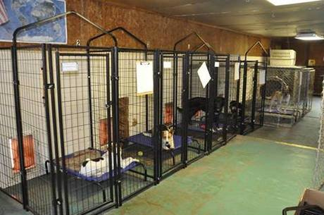 Photo of What You Need To Know About the Best USA Animal Shelters and Why