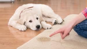 stop dog peeing on dog 2