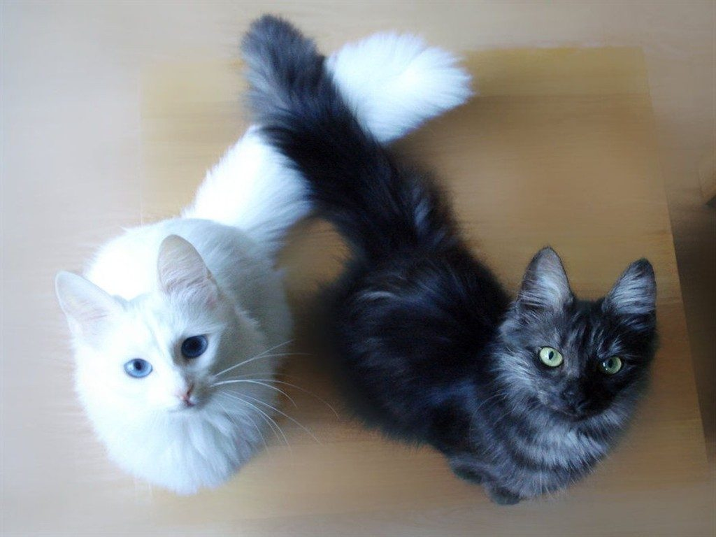 Photo of Don't Waste Time!  Facts Until You Reach Your Angora cat