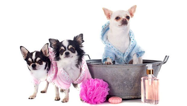 Photo of Most Popular US Pet Grooming Schools