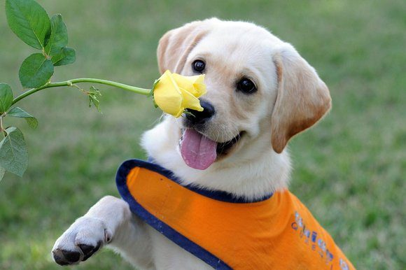 Photo of Top 6 Dogs Charities in United States