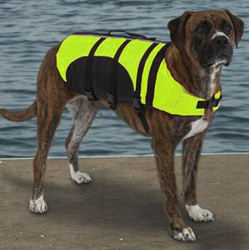bright-colour-of-life-jacket-045