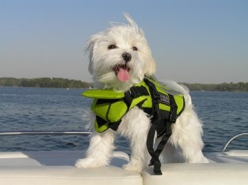 dog-wearing-life-jacket-0125