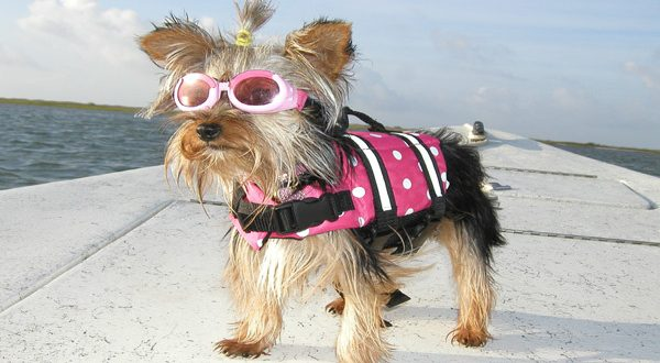 How to Choose the Most Suitable Dog Life Jacket