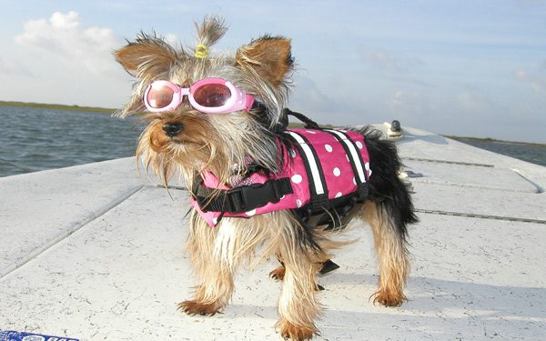 Photo of How to Choose the Most Suitable Dog Life Jacket