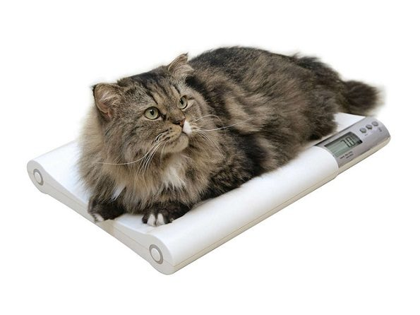 cat-on-scale-09