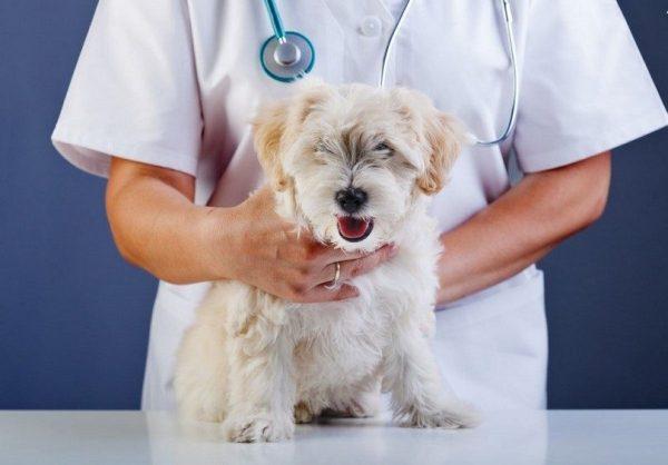 dog-at-the-vet-018