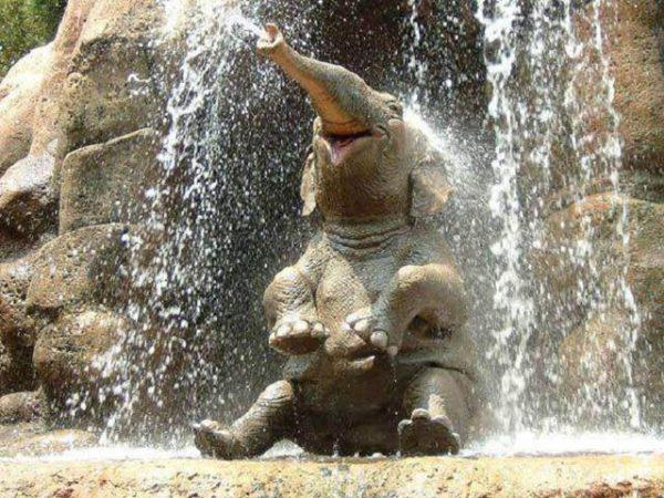 baby-elephant-playing