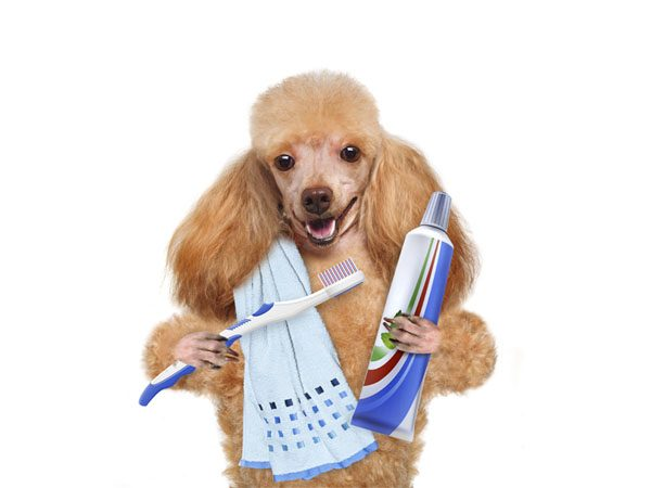 Best Dental Products for Dogs