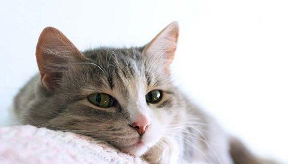 female-cat-in-heat-048
