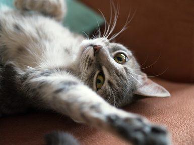 female-cat-in-heat-058