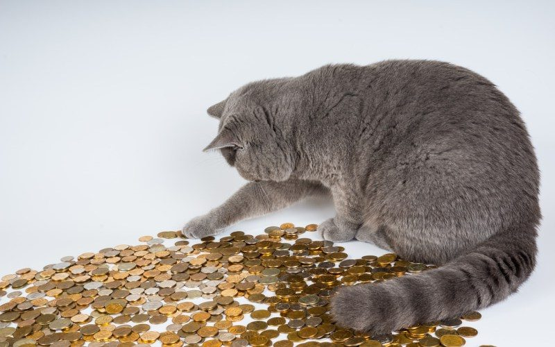 Photo of 6 Steps to Save More with Cat Insurance