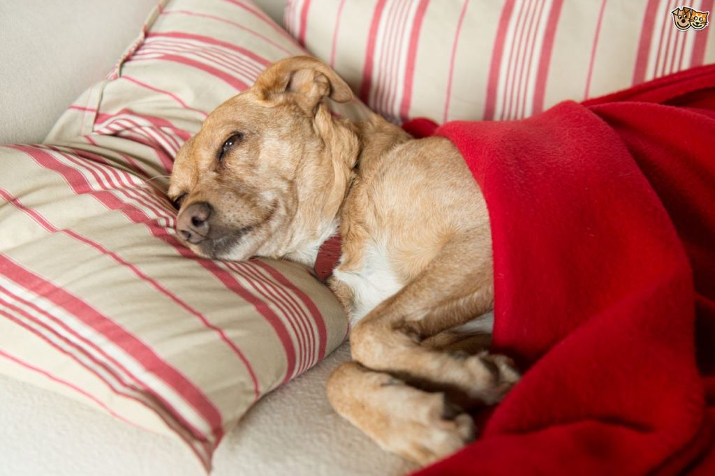 Photo of 7 Most Important Signs To Know If Your Dog Is Sick