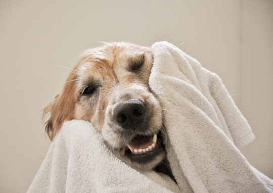 warm-cloth-to-the-affected-dog-with-pimples