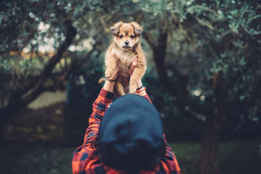 Photo of How to Know That Your Dog Is Suffering from Depression?!