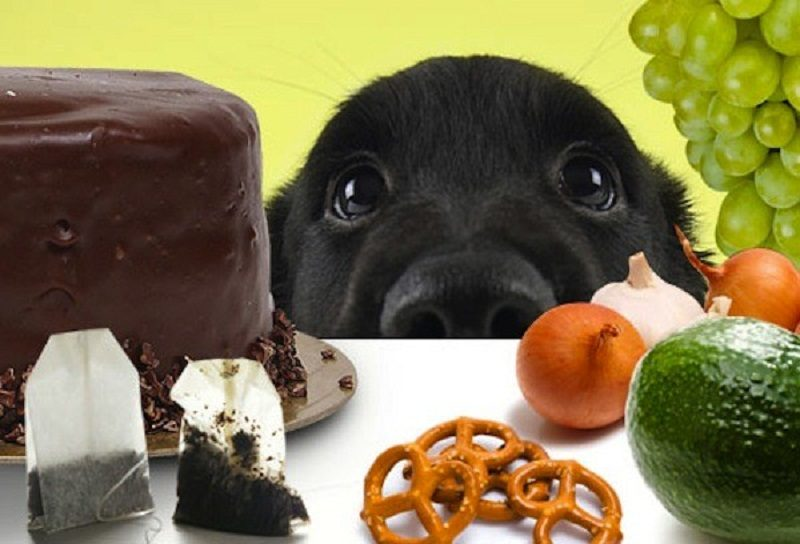 Photo of The time is running out. Thinks about these foods your dog shouldn't eat.