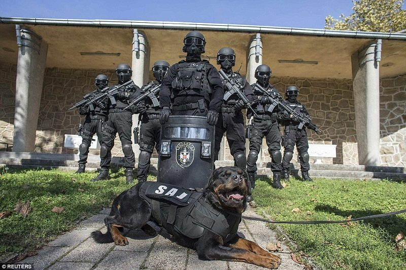 Photo of You Can Thank Us Later –  10 dog Breeds To Stop Thinking About Best Police Dog