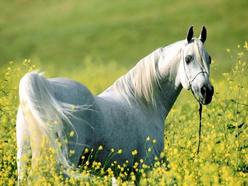 Photo of Top 12 Beautiful Horses In The World You Should Know