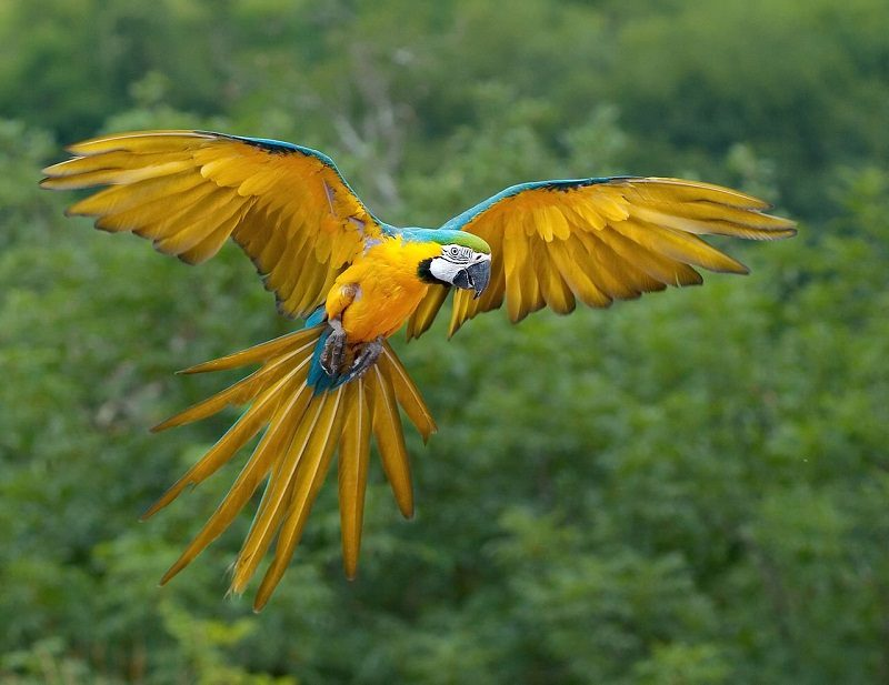 Photo of Want To Know More About Parrots? Read This!