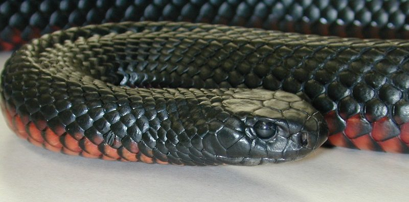 Photo of The 8 Most Dangerous Animals To Own As Pets