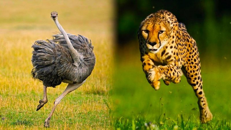 Photo of Top 15 Fastest Animals In The World