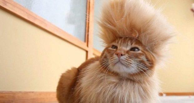 Munchkin Cat Archives Disk Trend Magazine
