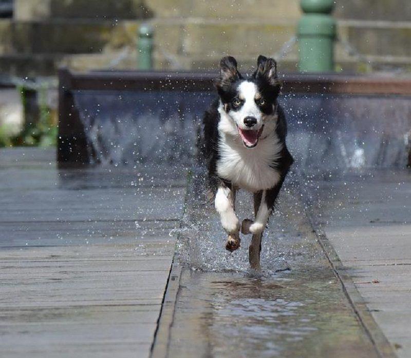 Less Hyper Dog Breeds