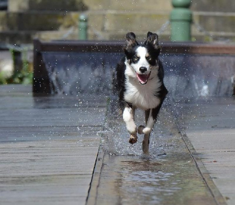 Photo of Attention: Hyper Dog Breeds