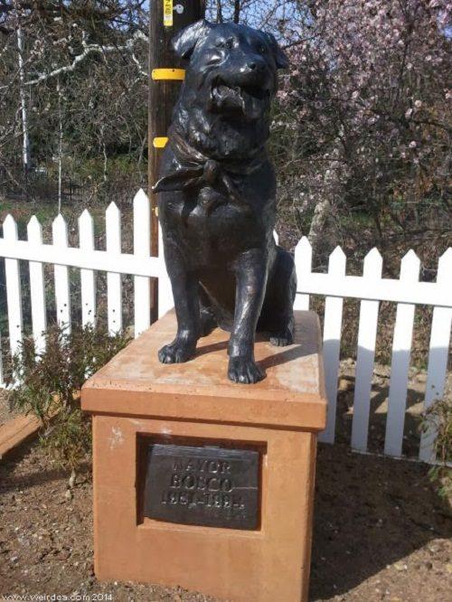 Do You Need To Know About Labrador Retriever Dog Read