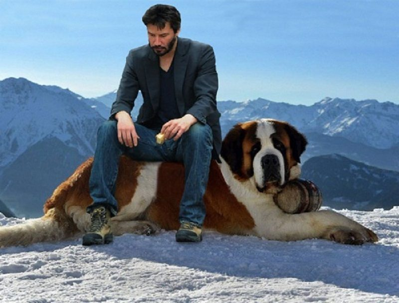 Photo of Yes, You Can Stop Thinking About It………Top 10 Mountain dogs