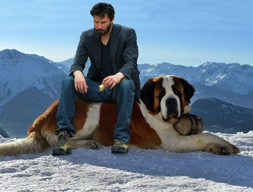 What Is The Name Of The Biggest Dog