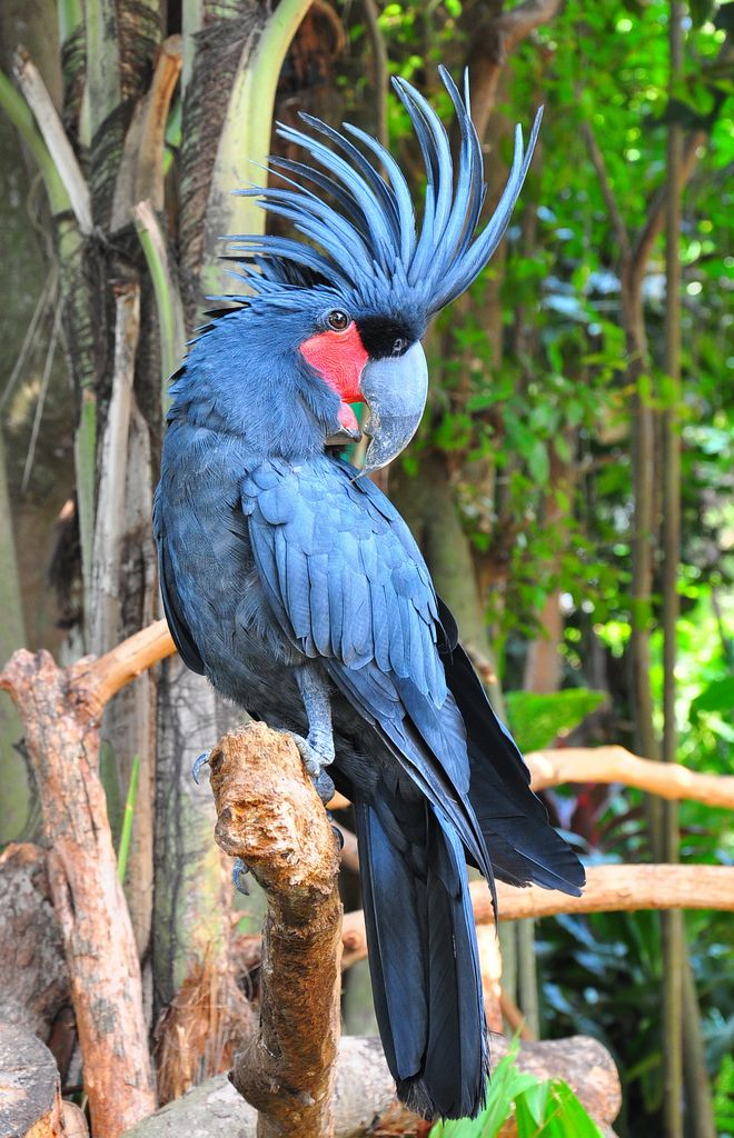 Top 10 Expensive Birds With an intriguing Amalgam of Colors - Disk