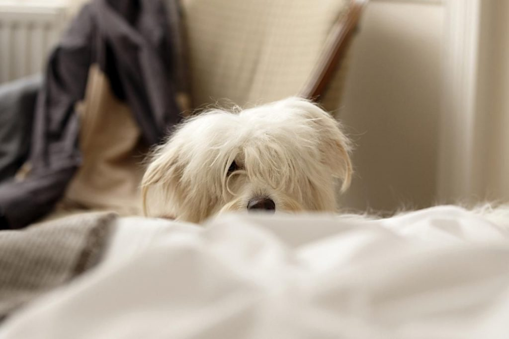 Photo of Top Reasons Why Dogs Wake Up their Owners