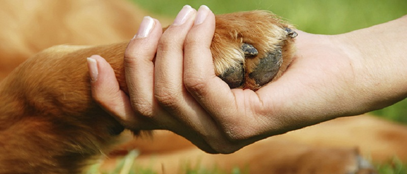 Photo of 5 Ways to Keep Your Dog Engaged