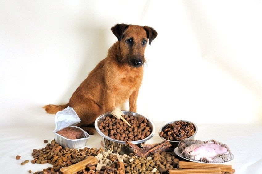 Tips How To Feed A Dog With Upset Stomach Disk Trend Magazine