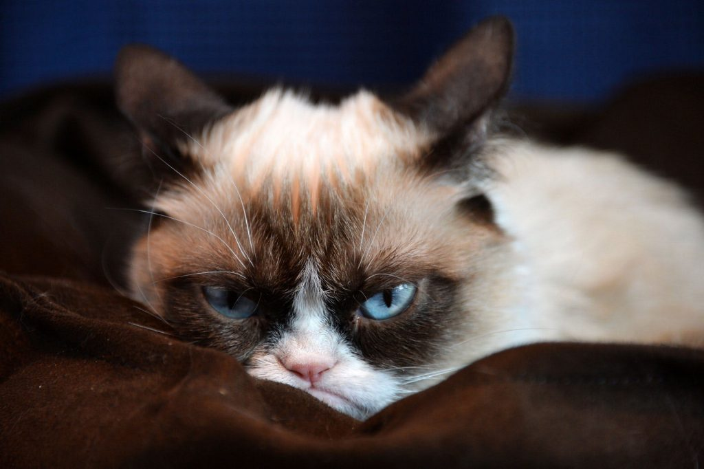 Photo of 7 Cat Methods For Waking Up Their Owners