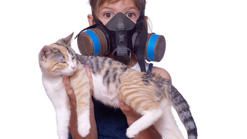 Photo of How To Get Rid Of Cat Urine Smell In The House