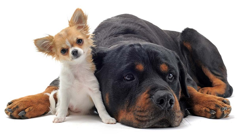 Photo of Top 15 Smallest Dog Breeds