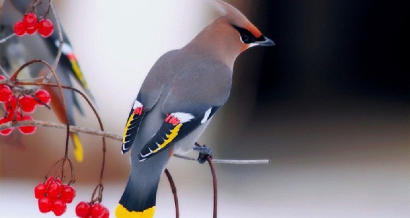 Photo of Top 13 Pretty Birds In The World