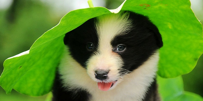 Photo of 12 Facts About Border Collies
