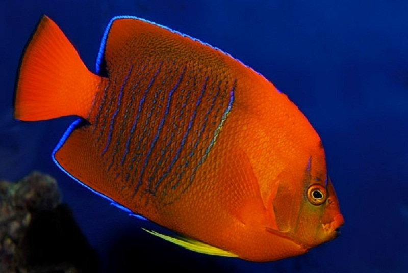 Photo of Top Ten Most Expensive Tropical Fish