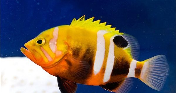 Top Ten Most Expensive Tropical Fish Disk Trend Magazine