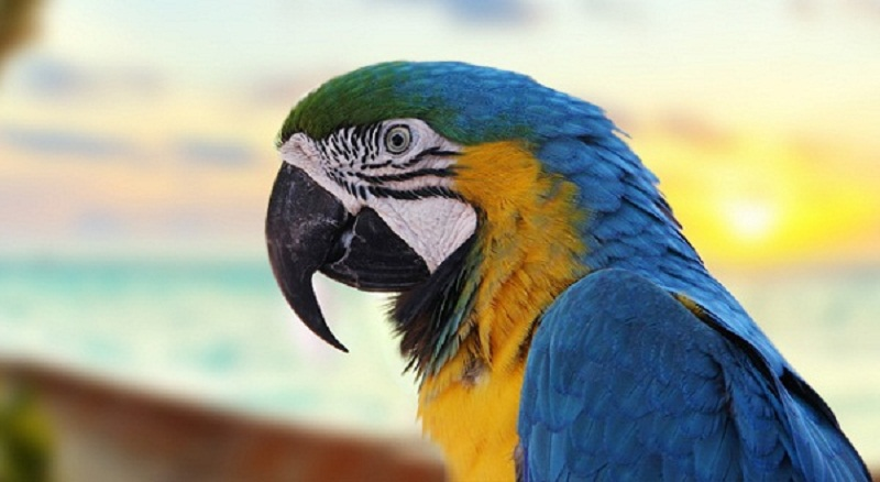 Photo of Top 10 Most Beautiful Parrot species Worldwide