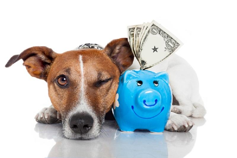 Photo of Making Money By Dog Breeding