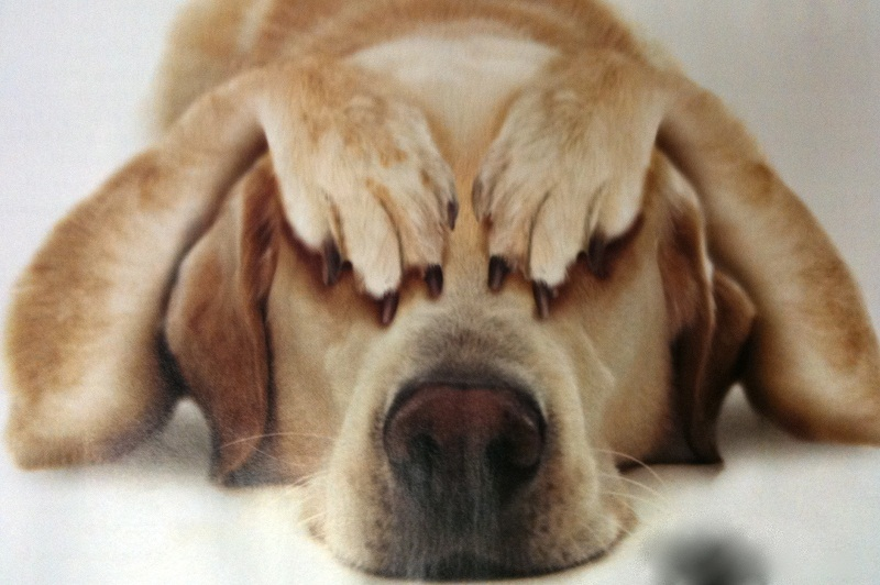 Photo of Knowing These 10 Human Behaviors That Stress Dogs Out