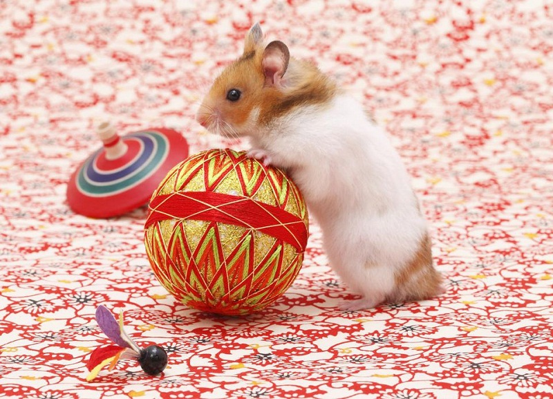 Photo of 10 Interesting Facts About Hamsters