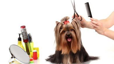Photo of Can You Clip Your Dog's Hair at Home?